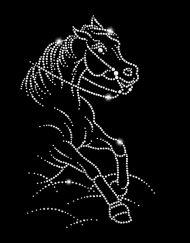 Arabian Supreme Reining